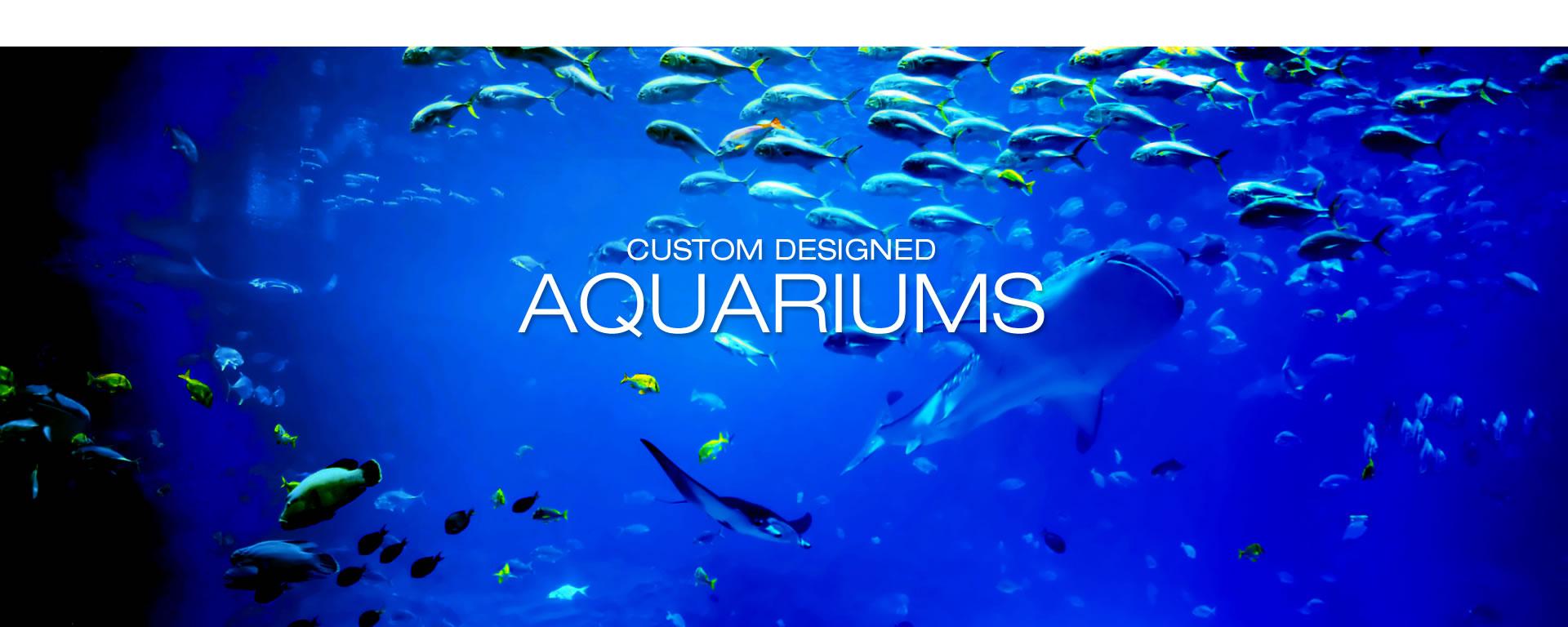 Aquarium Design International Custom Acrylic Aquarium