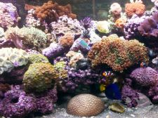 Photo Gallery - Living Reef